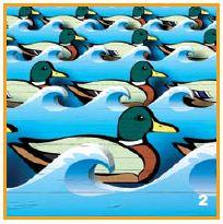 sitting_ducks